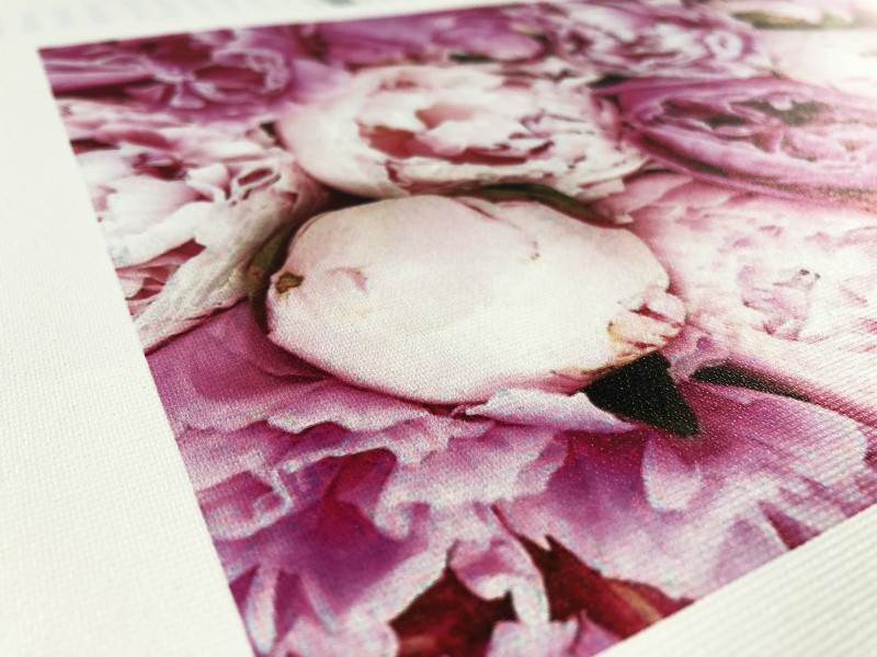 Stampa Canvas Rose